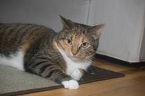 Jaina the cat